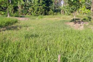 Tanah kavling murah di Tumbak Bayuh Badung Bali