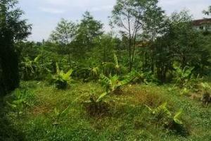 Tanah murah di Kulibul Tibubeneng Canggu