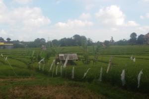 Tanah disewakan di Canggu