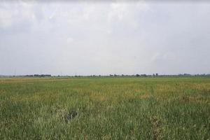 Dijual Lahan 10 Hektar, Khusus TPU di  Kecamatan Tambelang ,Bekasi,
